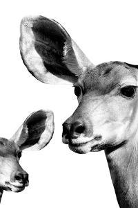 Safari Profile Collection - Antelope and Baby White Edition VI by Philippe Hugonnard