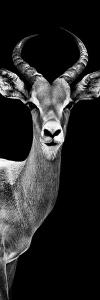 Safari Profile Collection - Antelope Black Edition III by Philippe Hugonnard