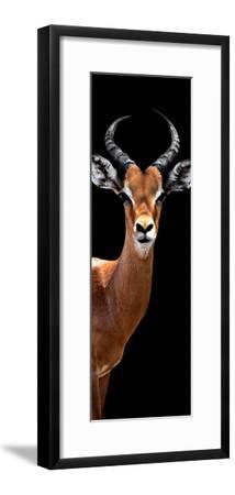 Safari Profile Collection - Antelope Black Edition IV