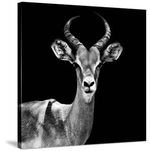 Safari Profile Collection - Antelope Black Edition V by Philippe Hugonnard