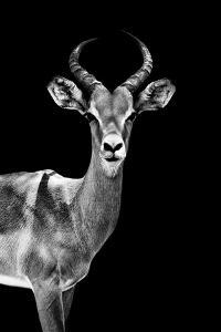 Safari Profile Collection - Antelope Black Edition by Philippe Hugonnard
