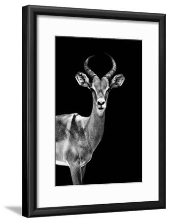 Safari Profile Collection - Antelope Black Edition