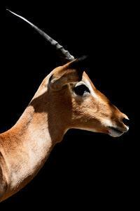 Safari Profile Collection - Antelope Impala Black Edition VI by Philippe Hugonnard