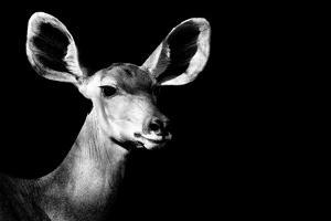 Safari Profile Collection - Antelope Impala Portrait Black Edition II by Philippe Hugonnard