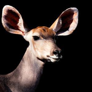Safari Profile Collection - Antelope Impala Portrait Black Edition V by Philippe Hugonnard