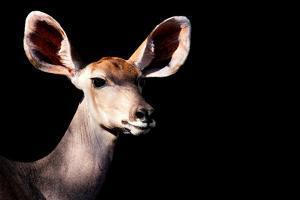 Safari Profile Collection - Antelope Impala Portrait Black Edition by Philippe Hugonnard