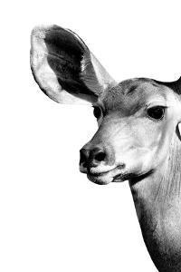 Safari Profile Collection - Antelope Impala Portrait White Edition IV by Philippe Hugonnard