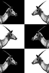 Safari Profile Collection - Antelopes Impalas by Philippe Hugonnard