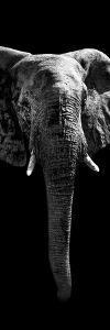 Safari Profile Collection - Elephant Black Edition II by Philippe Hugonnard