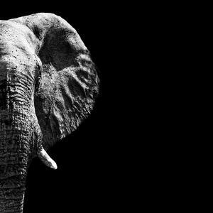 Safari Profile Collection - Elephant Portrait Black Edition III by Philippe Hugonnard