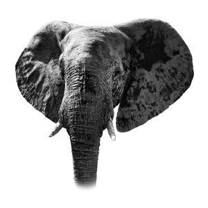 Safari Profile Collection - Elephant Portrait White Edition by Philippe Hugonnard