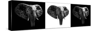 Safari Profile Collection - Elephants III by Philippe Hugonnard