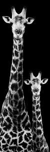 Safari Profile Collection - Giraffe and Baby Black Edition IV by Philippe Hugonnard