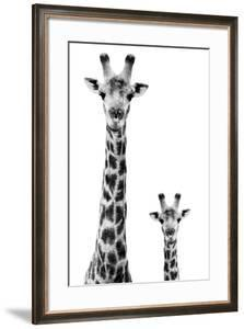 Safari Profile Collection - Giraffe and Baby White Edition II by Philippe Hugonnard