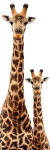 Safari Profile Collection - Giraffe and Baby White Edition III by Philippe Hugonnard