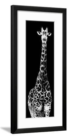 Safari Profile Collection - Giraffe Black Edition IV