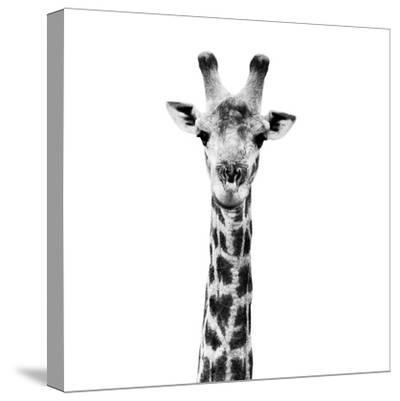 Safari Profile Collection - Giraffe Portrait White Edition IV