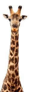 Safari Profile Collection - Giraffe White Edition IX by Philippe Hugonnard