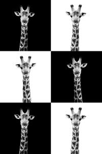 Safari Profile Collection - Giraffes by Philippe Hugonnard