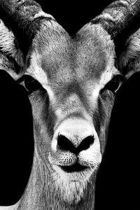 Safari Profile Collection - Portrait of Antelope Black Edition by Philippe Hugonnard