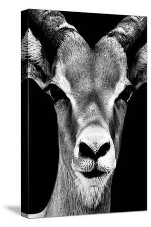 Safari Profile Collection - Portrait of Antelope Black Edition