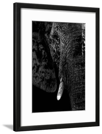Safari Profile Collection - Portrait of Elephant Black Edition