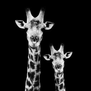 Safari Profile Collection - Portrait of Giraffe and Baby Black Edition II by Philippe Hugonnard