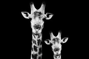 Safari Profile Collection - Portrait of Giraffe and Baby Black Edition VI by Philippe Hugonnard