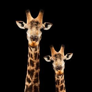 Safari Profile Collection - Portrait of Giraffe and Baby Black Edition by Philippe Hugonnard