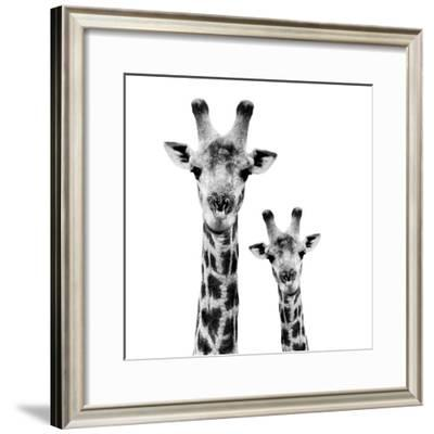 Safari Profile Collection - Portrait of Giraffe and Baby White Edition II