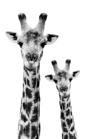Safari Profile Collection - Portrait of Giraffe and Baby White Edition IV by Philippe Hugonnard