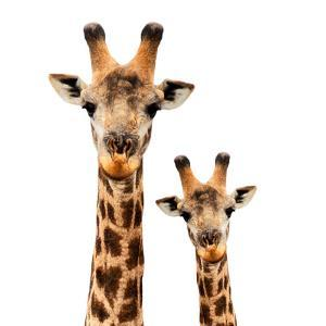 Safari Profile Collection - Portrait of Giraffe and Baby White Edition by Philippe Hugonnard