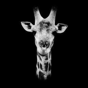 Safari Profile Collection - Portrait of Giraffe Black Edition IV by Philippe Hugonnard