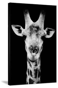 Safari Profile Collection - Portrait of Giraffe Black Edition V by Philippe Hugonnard
