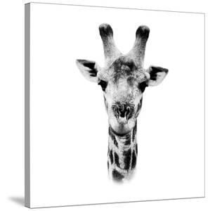 Safari Profile Collection - Portrait of Giraffe White Edition IV by Philippe Hugonnard
