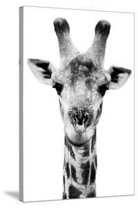 Safari Profile Collection - Portrait of Giraffe White Edition V by Philippe Hugonnard