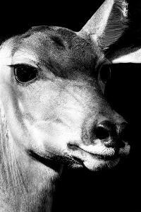 Safari Profile Collection - Portrait of Impala Black Edition by Philippe Hugonnard