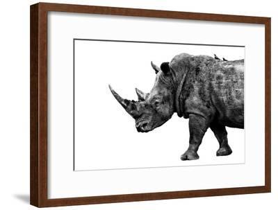 Safari Profile Collection - Rhino White Edition