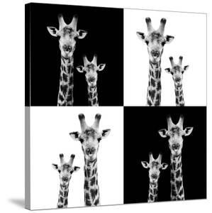 Safari Profile Collection - Two Giraffes II by Philippe Hugonnard