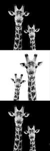 Safari Profile Collection - Two Giraffes III by Philippe Hugonnard