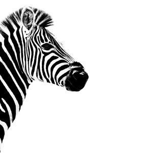 Safari Profile Collection - Zebra Portrait White Edition III by Philippe Hugonnard