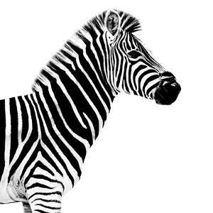 Safari Profile Collection - Zebra White Edition II by Philippe Hugonnard