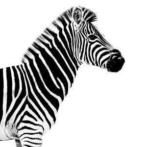 Safari Profile Collection - Zebra White Edition II by Philippe Hugonnard