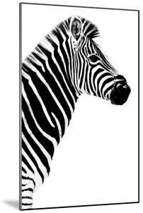 Safari Profile Collection - Zebra White Edition III by Philippe Hugonnard