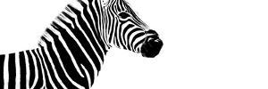 Safari Profile Collection - Zebra White Edition IV by Philippe Hugonnard