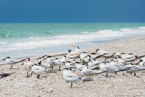 Seagulls on the Beach by Philippe Hugonnard