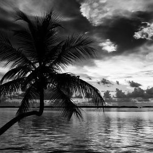 Silhouette of Palm Tree at Sunset by Philippe Hugonnard