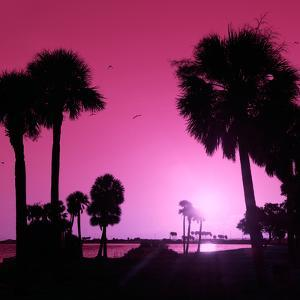 Silhouette Palm Trees at Sunset by Philippe Hugonnard