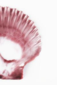 So Pure Collection - Pink Scallop Seashell III by Philippe Hugonnard