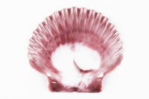 So Pure Collection - Pink Scallop Seashell by Philippe Hugonnard